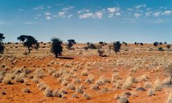 Imagen del Kalahari