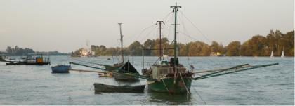 Foto de barcas en Coria del Río